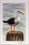 curious-seagull