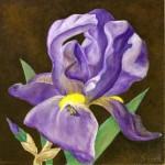 iris-and-bee